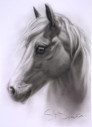 Horse Study V by Steven Smith -  sized 15x22 inches. Available from Whitewall Galleries
